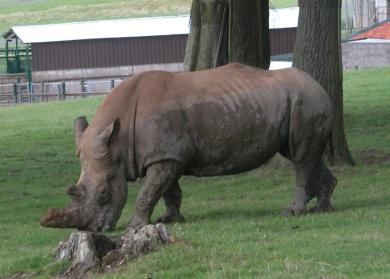 9. Rhino M