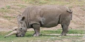 Extinct Animals 2